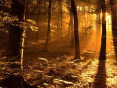 осень, ipad, природа
