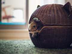 кошки, lodge, кошек