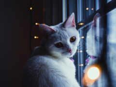 кот, white, окно