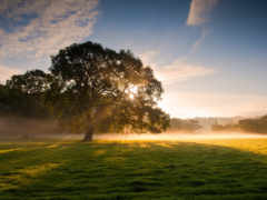природа, дерево, природы