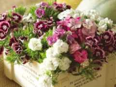 букет, cvety, martha