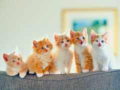 кот, котенок, коты