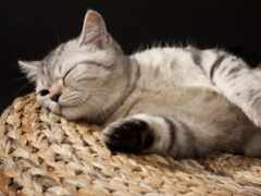 кот, спать, котенок