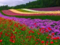 поле, красивые, stil