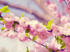 cvety, цветение, весна