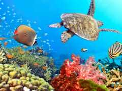 ocean, bora, underwater