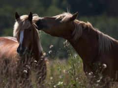horses, animals