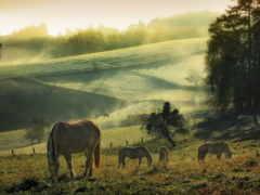 лошади, пасутся, лугу