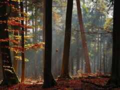 природа, лес, bora
