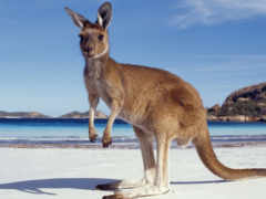 австралию, моего