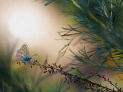 бабочка, аватар, blue