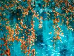 осень, дождь, красивый