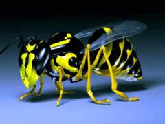 3д пчела