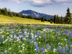 луг, cvety, цветов