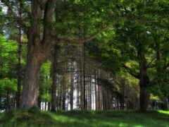 лес, region, объявление