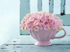 cvety, гортензия, розовый