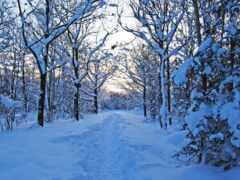 sweden, winter, безмолвие