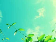 природа, небо, зеленое