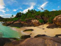 пляж, картинку, этого