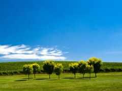 австралия, adelaide, природа