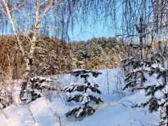 снег, winter, береза