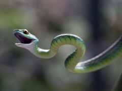 snake, funart, prozmei