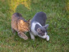 кот, пара, прогулка