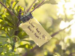 life, hope, цитата