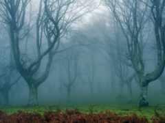 лес, fore, тусклый