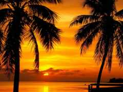 закат, florida, palm
