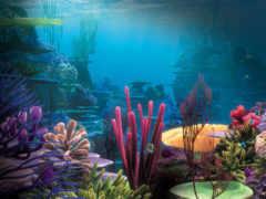 подводный, mir, фоны