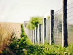 забор, цветы, фон