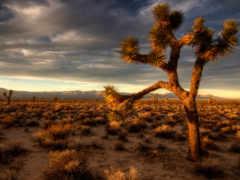 пустыня, полупустыня, закат