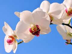 орхидея, фон, веточка