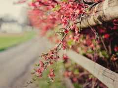 весна, cvety, розовый