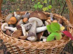 champignon, корзина, mushroom
