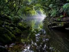 landscape, природа, natural