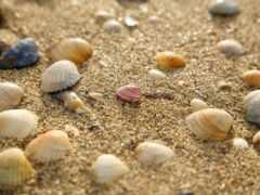 shell, seashell, peakpxpage
