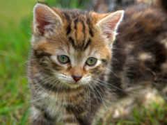 cute, кот, котенок
