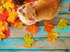 кот, осень