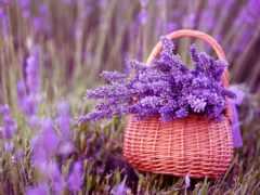день, каждый, lavender