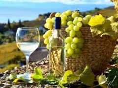 вино, шардоне, винограда