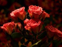 взлёт, цветы, роза