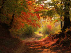 лес, осень, дорогой