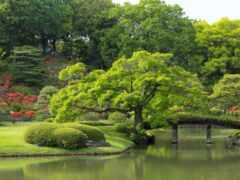 garden, japanese, дерево