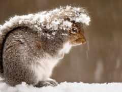 animal, лес, winter