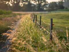 дорога, природа, поле