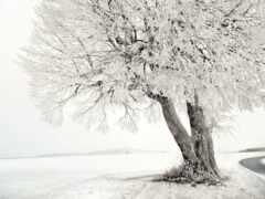 winter, природа
