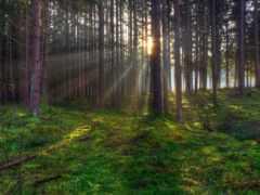 волыни, травы, леса
