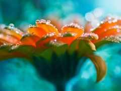 капли, waters, цветы